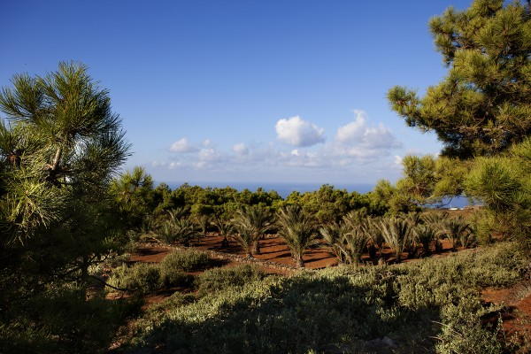 TENUTA BORGIA - pantelleria-borgia-natura-verde_02