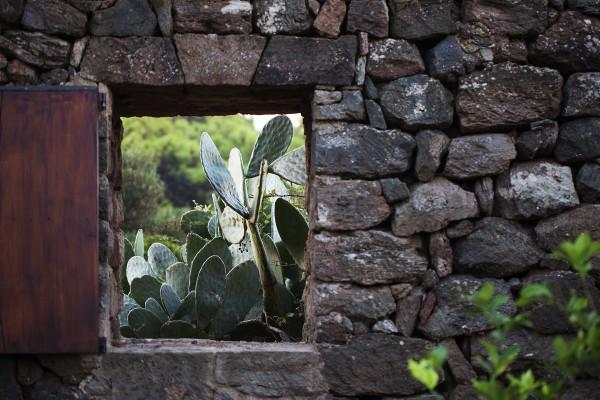 TENUTA BORGIA - pantelleria-borgia-natura-verde_11