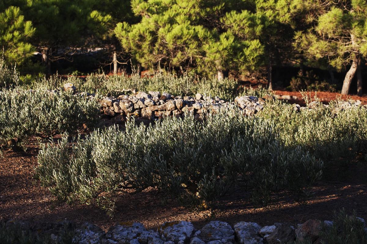TENUTA BORGIA - pantelleria-borgia-natura-verde_12