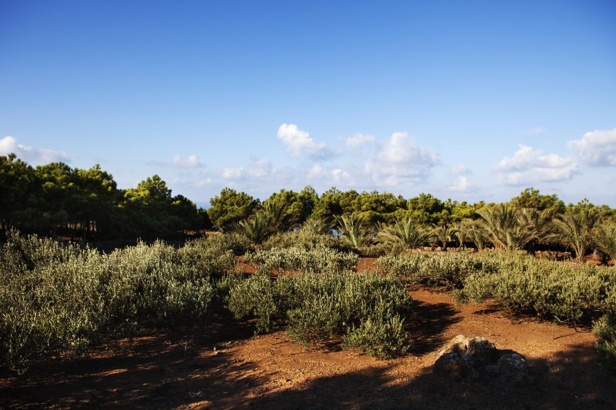 TENUTA BORGIA -  isola-pantelleria-vacanza-natura_06