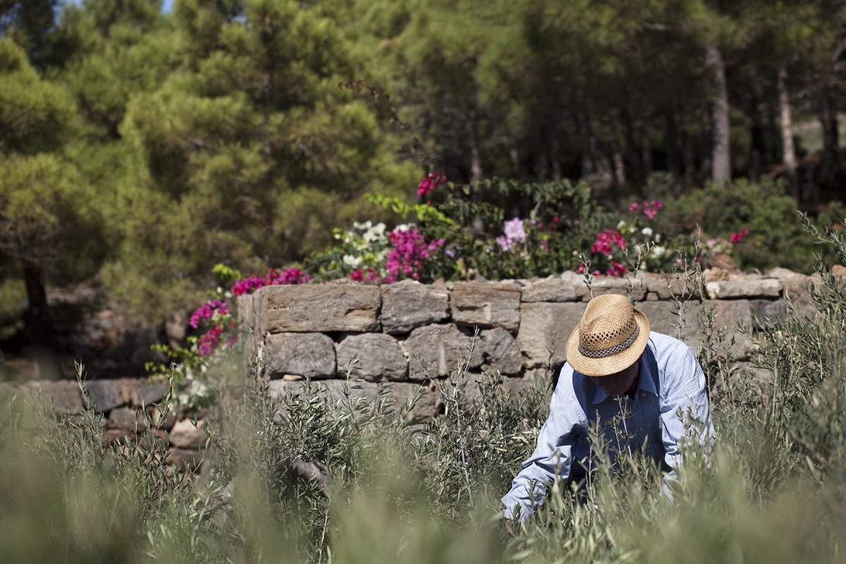TENUTA BORGIA -  pantelleria-borgia-natura-verde_03