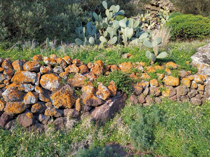 Tenuta Borgia - muretto a secco sito